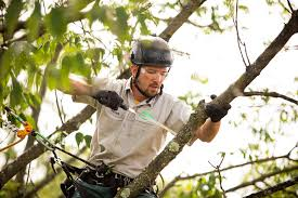 Family-Owned Tree Service